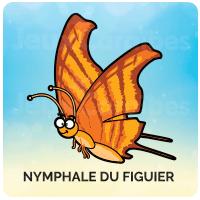 Nymphale du Figuier
