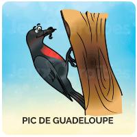 Pic de Guadeloupe